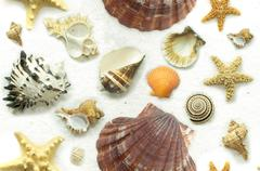 Stock Photo of Cluster of Seashells on White Sand