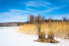 Stock Photo of Landscape with reed.