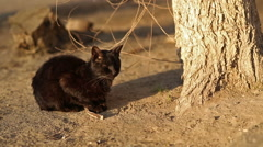 Black Homeless Cat Stock Footage