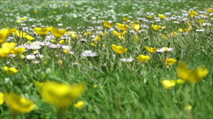 Wide low angle view of a weedy lawn Stock Footage