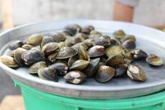 Big fresh clams in a tray - stock photo