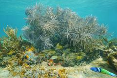 Underwater life sea plume soft coral with fish Stock Photos