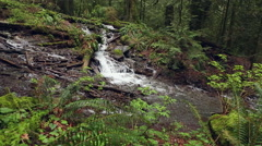 Pacific Northwest Rainforest and Lush Undergrowth Stock Footage