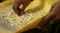 Woman picking and sorting cashew nuts with her hands. Stock Footage