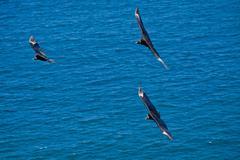 Beautiful blue sky and black birds flying Kuvituskuvat
