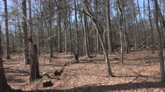 Chancellorsville Virginia Civil War forest 4K Stock Footage