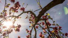 Timelapse, Springtree Stock Footage
