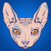 Hairless sphinx cat face graphics, outline Stock Illustration