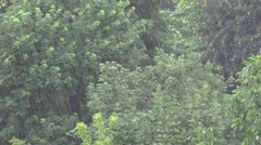 4K Storm, Torrential Summer Rain Forest, Wood, Foliage, Rainy, Stormy in Nature - stock footage