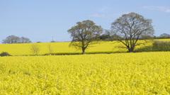 Yellow Fields 3 Stock Footage