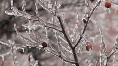 Plant in frozen storm Stock Footage