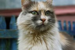 Stock Photo of Tri-color cat