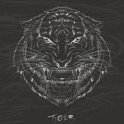 Tiger drawing with chalk on blackboard Stock Illustration