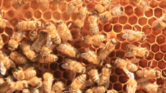 Honeybees in sunlight Stock Footage