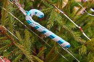 Stock Photo of Traditional Santa cane on green spruce branch.