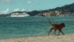 Stock Video Footage of Grenada island Caribbean Sea 027 Celebrity cruise ship opposite Grand Anse Bay