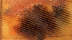 Dark spot on honeycomb Stock Footage