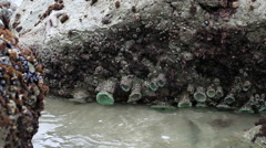 Rocks With Sea Waves Surging Pacifica California 1 Stock Footage
