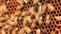 Bees on brown combs Stock Footage