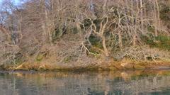 Drifting Along River Bank Springtime Evening Ancient Trees 4K Stock Footage