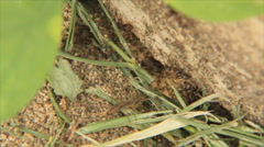 Anthill - stock footage