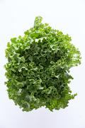 Above Head Shot of Newly Harvested Curly Leafy Lettuce - stock photo