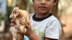 Child holding baby chicken. Stock Footage