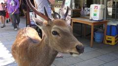Close Up Nara Japan Deer In Crowd Of People Stock Footage