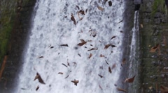 Dry leaves fall spectacular slow motion background with large waterfall Stock Footage