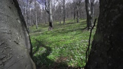 A huge beech forest with no leaves on the branches and colored green lawn Stock Footage