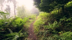 Slow push through misty forest path Stock Footage
