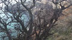 Crimea Russia Sevastopol Fiolent - Black sea, rocks , tree, moving camera 3 Stock Footage