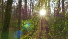 Spring forest panorama Stock Footage