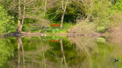 Green Lake and Nature in Park Stock Footage