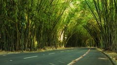 Timelapse View of Traffic Going Through Bamboo Tunnel at SSA Airport, Brazil Stock Footage