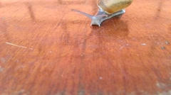 Snail crawling on wood floor Stock Footage