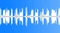 The Bird Cenzontle - Mimus Polyglottoses - sound effect