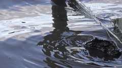 Ambient water ripples Stock Footage