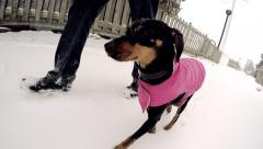 4K Taking The Dog For A Walk Marching Owner Winter Cold Stock Footage