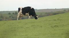 Cows, ireland Stock Footage