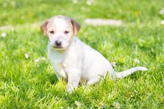 Mixed-breed cute little puppy on grass. Stock Photos