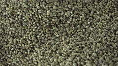 Semp Seeds (loopable) Stock Footage