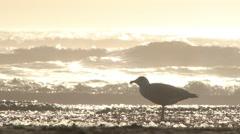 Beach Bird and Sunny Ocean Tide Stock Footage