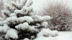 Snowfall asleep spruce in the park with snow Stock Footage