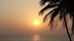 Palm Trees Silhouette At Sunset - stock footage