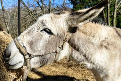 Close-up on the head of a donkey Stock Photos