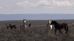 Wild horses in the Red Desert, Wyoming Stock Footage