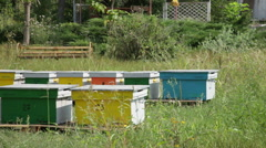 Stock Video Footage of Colorful beehives, beekeeping, countryside farm, bees, honey