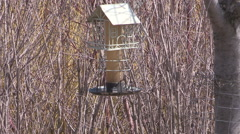 Birdhouse in Toronto surrounded by budding trees and flowers in the spring - stock footage