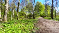 Lovely forest in early summer - steadicam Stock Footage
